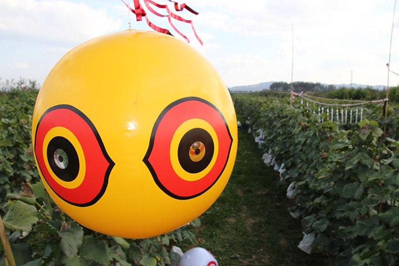 大眼驱鸟气球,驱鸟产品,福建广东驱鸟